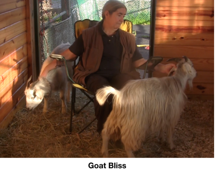 Goat Diaries Day 11 Goat bliss.png