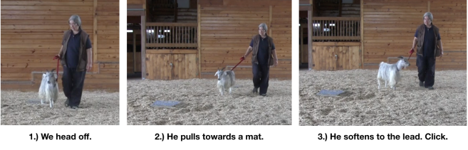 Goat diaries Day 12 e encounters mats 4.png