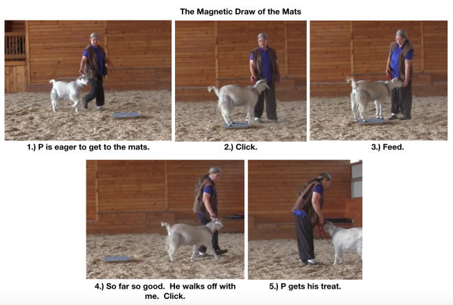 Goat diaries day 12 magnetic draw of mats 1.png