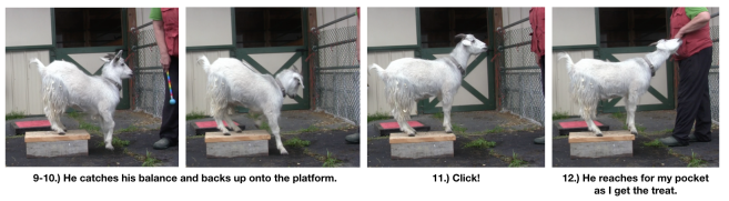 Goat diaries day 4 two platforms Pt 3  panels 9-12.png