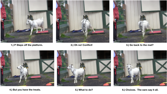 goat diaries day 5 panels 1-6 P excitement.png