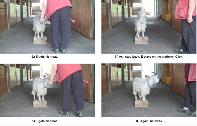 Goat diaries Day 7 E morning session panel 2.png