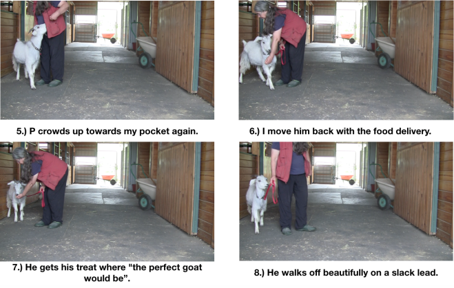 Goat Diaries day 7 P leads panel 2.png