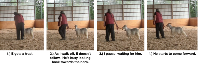 Goat Diaries Day 8 E leading 4 panels 1.png