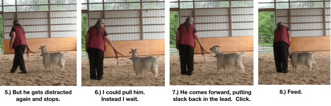 Goat Diaries Day 8 E leading 4 panels 2.png
