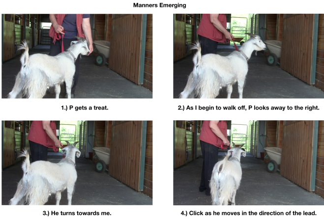 Goat diaries P Day 7 Manners emerging panel 1.png
