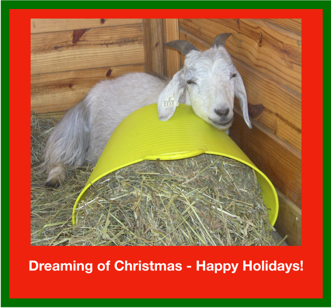 Goats - Dreaming of Christmas.png