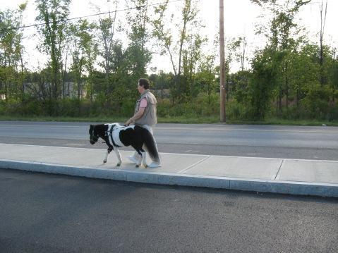Panda and Ann guiding on sidewalk HS.JPG