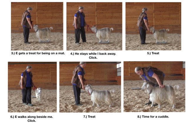 Goats day 12 if goats could purr fig 3 -8