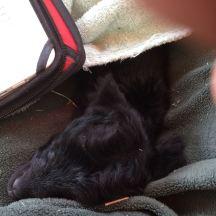 IMG_4168 Felicity sleeping