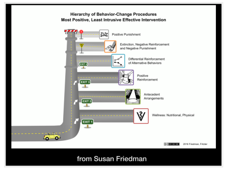 Susan Friedman's hierarchy