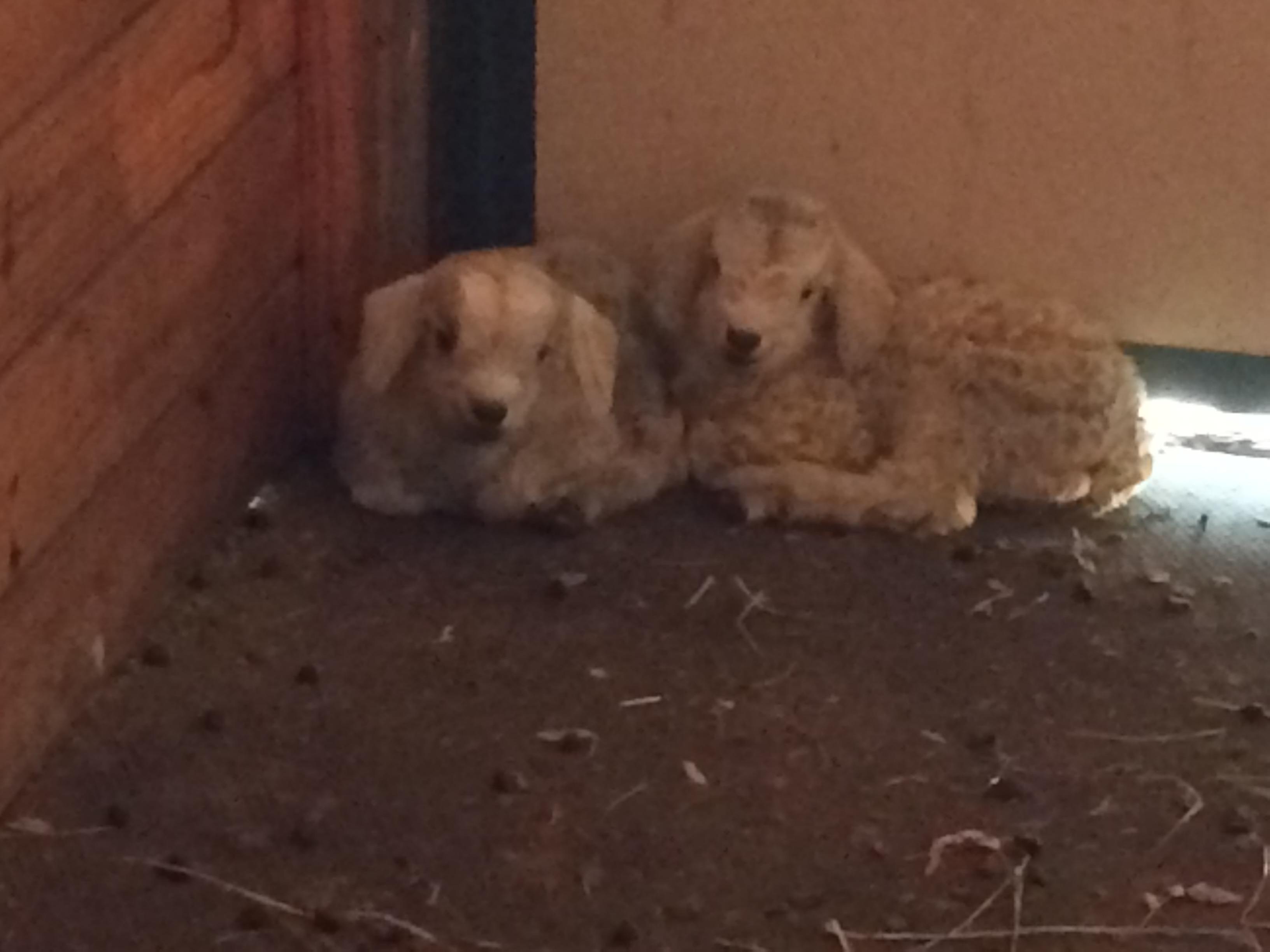 IMG_5796 (1) Wren Finch newborns